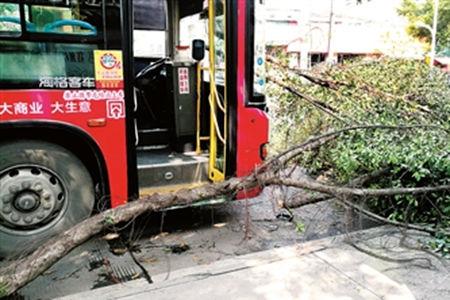 断裂树枝掉下砸中75路公交车